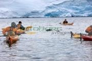 leopard-seal-surfaces-in-group-sea-kayakers-in-port-lockroy-antarctica