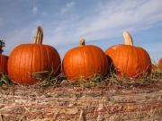 pumpkins-on-top-hay-bale