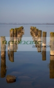 old-ruined-abandoned-jetty-stantions-leading-off-into-lough-neagh-county-armagh-northern-ireland