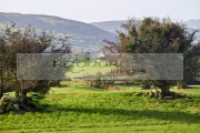 fairy-thorn-trees-in-the-middle-fields-in-south-county-armagh-northern-ireland
