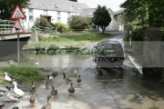 wildfowl-ducks-water-fowl-crossing-at-road-ford-with-car-ballsalla-isle-man-IOM
