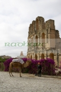 vertical-tourist-trap-old-man-with-camel-on-approach-to-the-old-colloseum-from-tourist-car-park-el-jem-tunisia